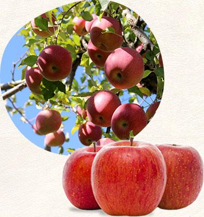 渡辺りんご園のこだわり