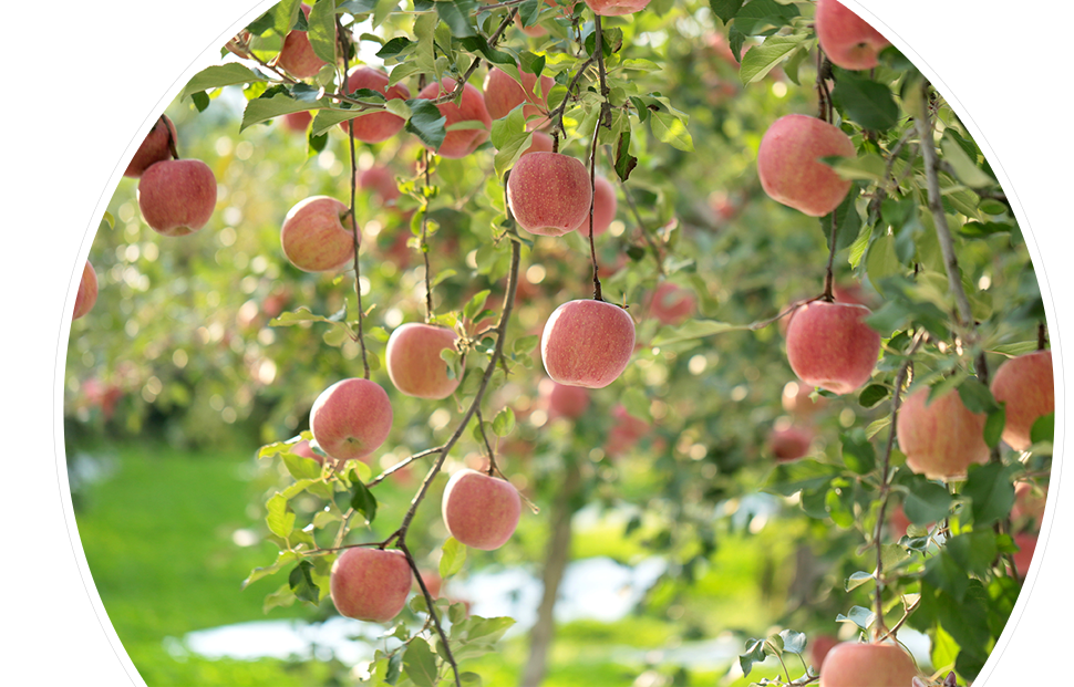 渡辺りんご園